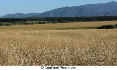 Dry Grass Wild Lands - Yellow field of herbs, with mountains...