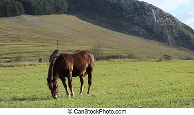 Young Horse on Pasture - Brown horse grazing on meadow. A...