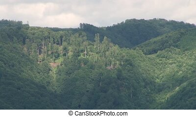 Forest on Moountain Slopes