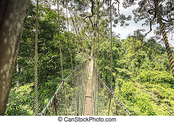 Canopy walkway in Kakum National Park, Ghana, West Africa