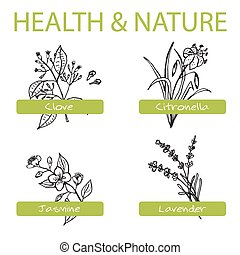 Handdrawn Set - Health and Nature Collection of Medicine...