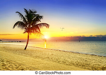 Sunset on the beach - Beautiful sunrise at Key West,...