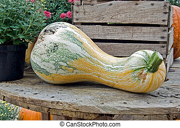 Oversized - Large gourd on a wooden table.
