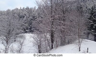 Rural landscape - Winter forest and rural landscape