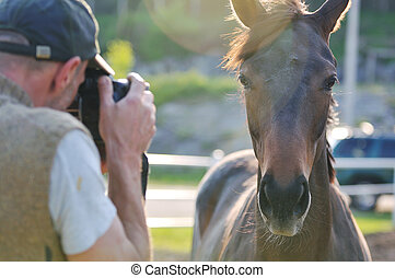 photographer and horse - man taking photographs of the horse...