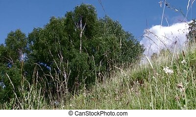 Herbs and Trees Low Angle View - A view from ground of some...