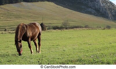 Horse on Windy Grassland - A young brown horse is grazing on...