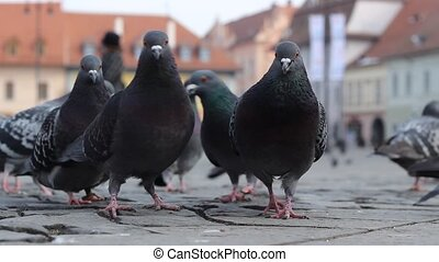 Ground View of Pigeons - View from the ground with birds and...