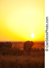 African sunrise - Typical african sunrise with elephants...