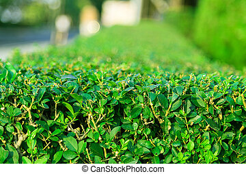 plants lawn and alley green background