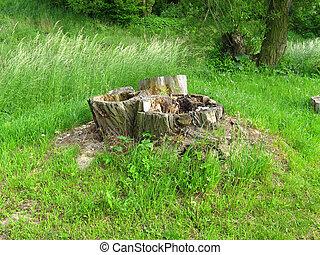 Tree stump in green grass