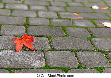 yellow leaf on paving stone