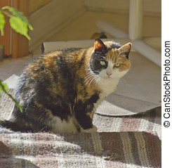 Calico Kitty - Curious, older calico cat sitting in a sunny...