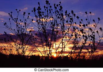 Prairie Sunset Landscape Illinois