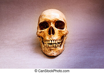 Human skull - Still life with a human skull concept on the...