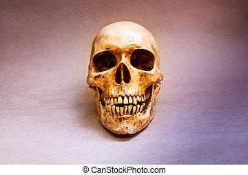 humano, skull.,