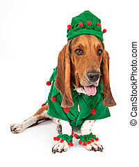 Basset Hound Elf Dog - A cute young Basset Hound dog dressed...