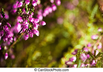 natural spring plant background with copy-space