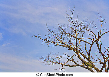 Dead Drought Tree - Dead drought tree because of global...
