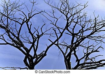 Shilloute black dead three - Shilloute dead drought tree...