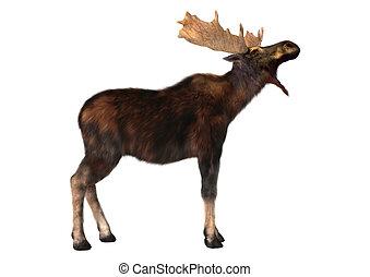 Moose,