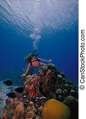 Caribbean Diver 2 - A scuba diving girl in a bikini poses...