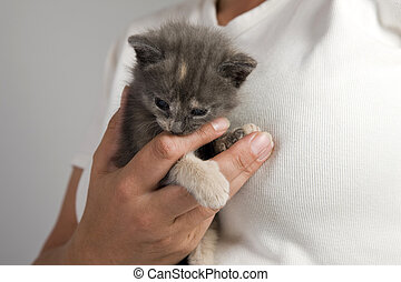 Cat - Kitten in Woman Hand