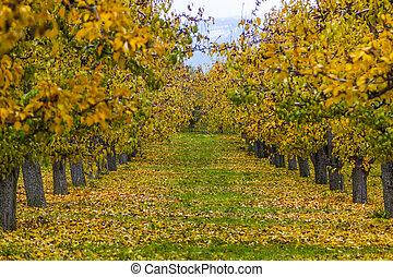 un, huerto, en, otoño,