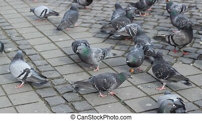 Pigeons Feed with Bread - On the paved city square, dozens...