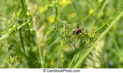 Red Bug Stays on Herbage