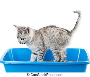 cat toilet isolated on white background