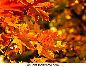 autumn fall leaves, very shallow focus