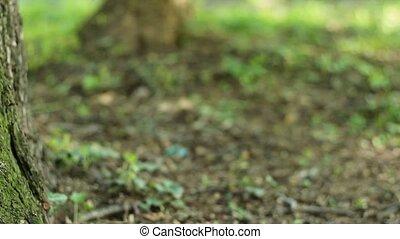 Shadows Flicker on Tree Moss
