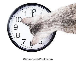clock cat