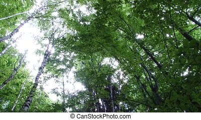 View from Ground of High Trees in F - View from bottom of...