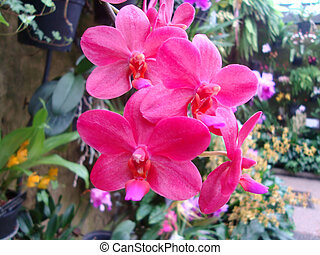 Pinkish Flowers - These Flowers/Orchids are a thing of...