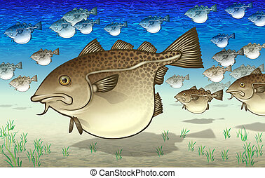 Fish - Cod - Many highly pregnant cods swimming together in...