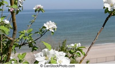 White Flowers at Sea Shore - White in bloom flowers near the...