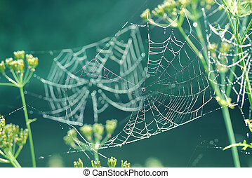 Gentle naturalistic background with spider web with dew -...