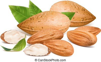 Almonds with kernels and leaves Vector illustration