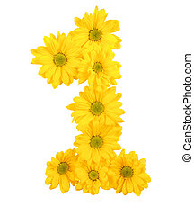 chrysanthemum - yellow chrysanthemum is number and symbol on...
