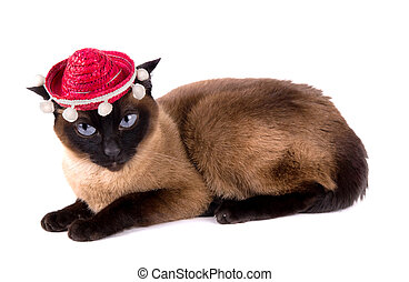 funny jumpy animal party siamese cat isolated on white...
