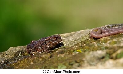 Toad frog an earthworms