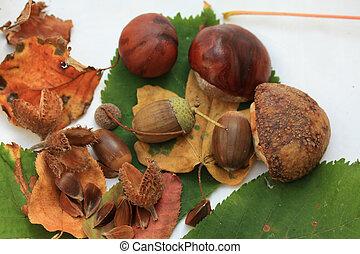 Autumn still life - Still life with acorns, chestnuts, beech...