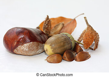 Autumn still life - Beech nuts, chestnut and acorn with an...