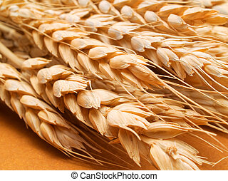Wheat close up - raw food