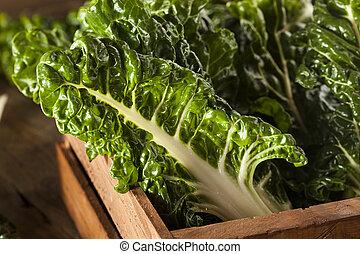 Fresh Organic Green Chard Ready to Eat