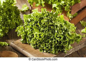 orgânica, saudável, alface, verde, fresco, folha
