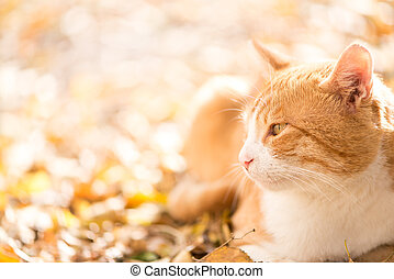 Orange cat - Beatiful cat looking on the side, copy space