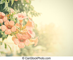 Vintage flowers Antique style photo of tree flowers with...